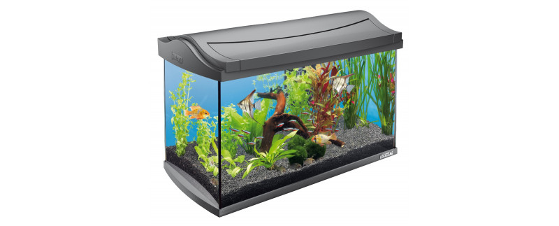 Fish Aquarium Decoration
